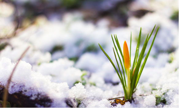 It's All About Perspective: Why Spring Came for a Moment in the Middle of Winter
