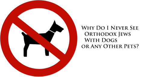 Why Do I Never See Orthodox Jews With Dogs or Any Other Pets?