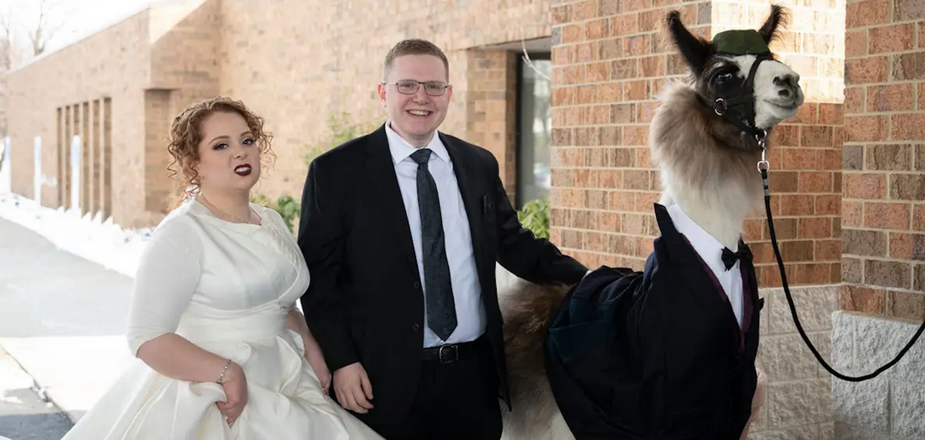 Frum Man Brings Llama to His Sister's Wedding & Other Orthodox Jews in the News